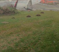 Raaaaah les taupes adorent notre jardin !