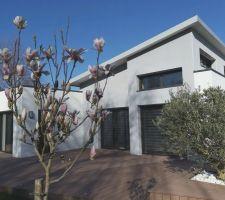 Magnolia en fleur...