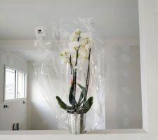 L'orchidée offerte par le CST