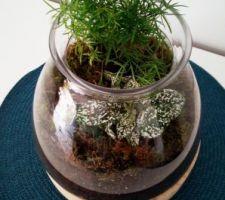 DIY terrarium Hypoestes mix et Asparagus Densiflo