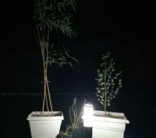 Terrasse terminée avec coin végétal : babou, eucalyptus et saule à petites feuilles