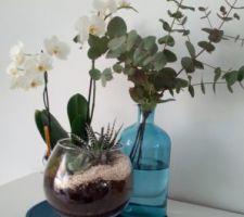 Terrarium plantes grasses