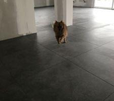 Mouki dans sa nouvelle maison