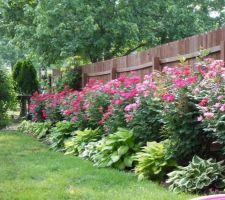 Idée clôture bois au fond du jardin