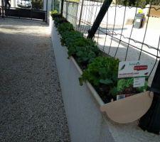 Potager vertical dans des gouttières : salades et radis