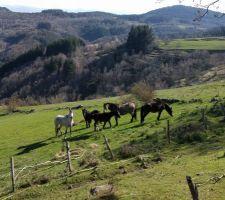 Arrivée des chevaux en Ardèche