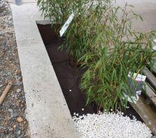 Bambous Étape 3:  Je vide la moitié du big bag qui me restait après l'olivier,  et je repartis...
