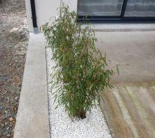Bambous Étape 4:  Contempler!!!