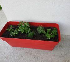 Le printemps est là, il est temps de remplir ma grande jardinière rouge! Menthe, basilic, ciboulette, thym, persil...