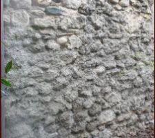 Mur de la grange du voisin cour arrière, enduit de propreté à faire...
