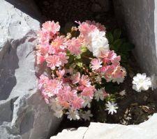 Floraison en ce 1er mai