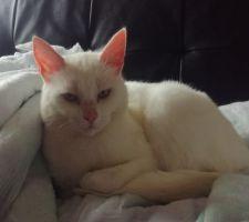 Voici Poutchie, notre gentille petite chatte de 3 ans