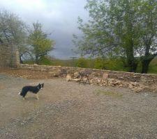 Montage du muret en pierre et la chien qui se met toujours dans le plan