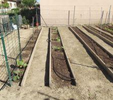 Concombres, courges, courgettes, salades, betteraves, tomates, poivrons etc... à nous les bonnes choses