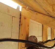 Une locataire suprise : une tourterelle a fait son nid et couve sous l'auvent sud