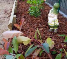Plantage des arbustes