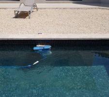Flipper notre Dolphin
