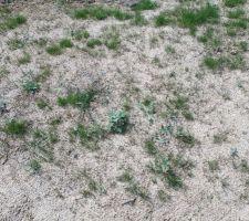 Le gazon a du mal à pousser... Trop sec