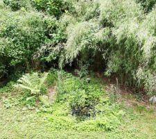 """Coin """"fontaine"""" qui a bien évolué... plus guère de helxine mais des plantes couvre sol diverses et variées qui se sont installées là, dont des fougères (plantées par mon mari) et des fraises des bois !"""