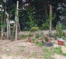Déménagement des grands cactus fait. Aucune idée d'où je les mettrai..