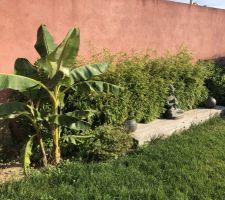 Petite photo du jardin en plein été