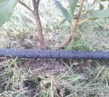 Système d'arrosage de la haie par tuyau poreux