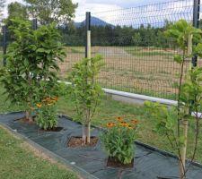 Entourage rectangulaire d'arbustes en voliges, avant paillage minéral