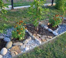 Entourage d'arbustes en voliges (certaines pliées) et paillage minéral