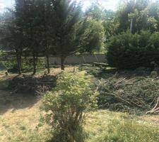 Abattage des cyprès de Leyland - Début du tas de branches