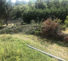 Abattage des cyprès de Leyland - Le tas de branches dans son ensemble