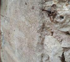 Crépi façade, chaux ou ciment !?