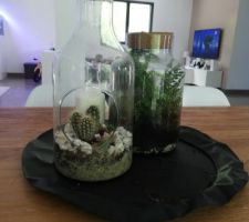 Terrariums en centre de table :) (Lidl !)