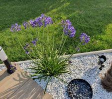 Plantation autour de la terrasse
