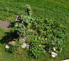 Jardin vu du toit, 14 septembre 2019
