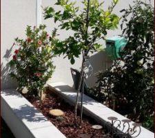J'ai mis une plante qui va grimper sur le mur et un citronnier 4 saisons , on verra s'il se plait à cet endroit !