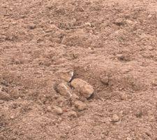 On attaque la préparation du terrain en vue de la création de la pelouse. En fin de journée ça a tout de suite plus de gueule. Il reste quelques cailloux qui sont enlevés à la main.