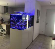 Aquarium marin 500L