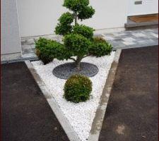 Les végétaux sont plantés