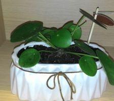 Plantes pour la niche de cuisine.