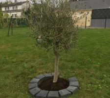 Plantation de l?olivier