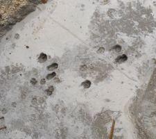 Le chat du voisin a laissé ses empreintes...