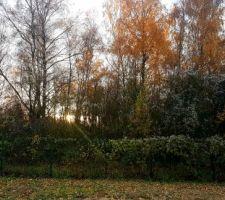 A la faveur de l'automne...