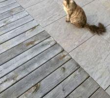 Couleur définitive de la terrasse en châtaignier, un gris qui ce marie bien avec les dalles