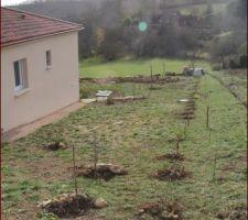 Plantation haie séparative en cours
