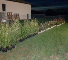 Livraison végétation