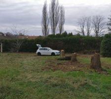 Les arbres coupés