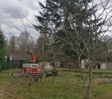 Les arbres en train d'être coupés
