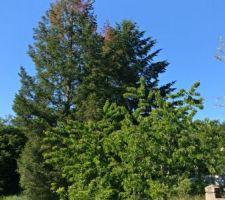 Les arbres étés 2019