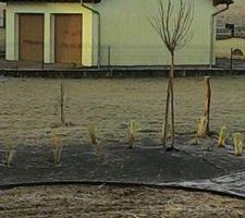 Début d'aménagement du jardin