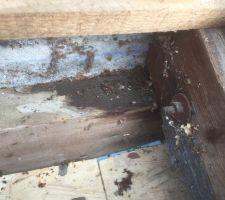 Infiltration sous le solin fixé en applique en partie haute du toit(toit à 1 pente. Ceci est un exemple car on retrouve ces infiltrations peu partout (environ 25m de solin)
